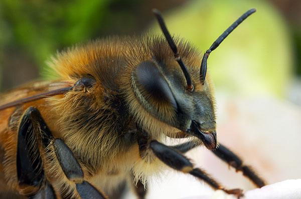 méh, méz, szabad levegő alapítvány,