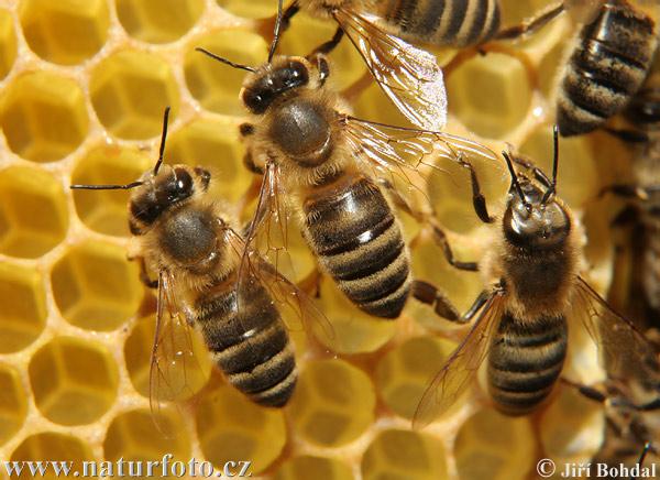 méhek, méz, szabad levegő alapítvány,