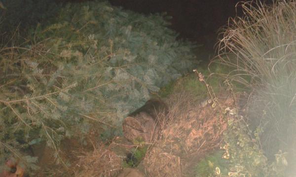 éjszakai ültetés