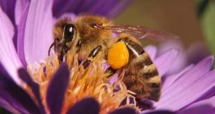 Mentsük meg a méheket!
