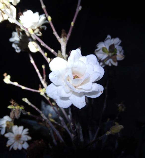 Éjjeli virágnézőben Paul's Garden-ben